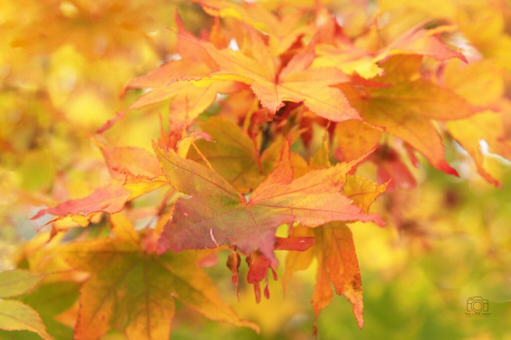 Japan Photography tour- Autumn Photography tour